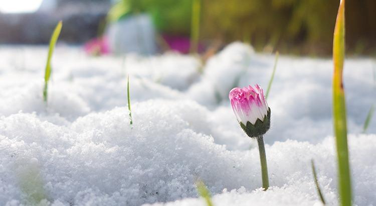 Le Piu Belle Frasi Sulla Primavera.Immagini Con Frasi Sulla Primavera Le 60 Piu Belle E Significative